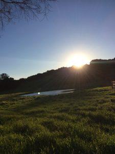 sunrise-over-pond
