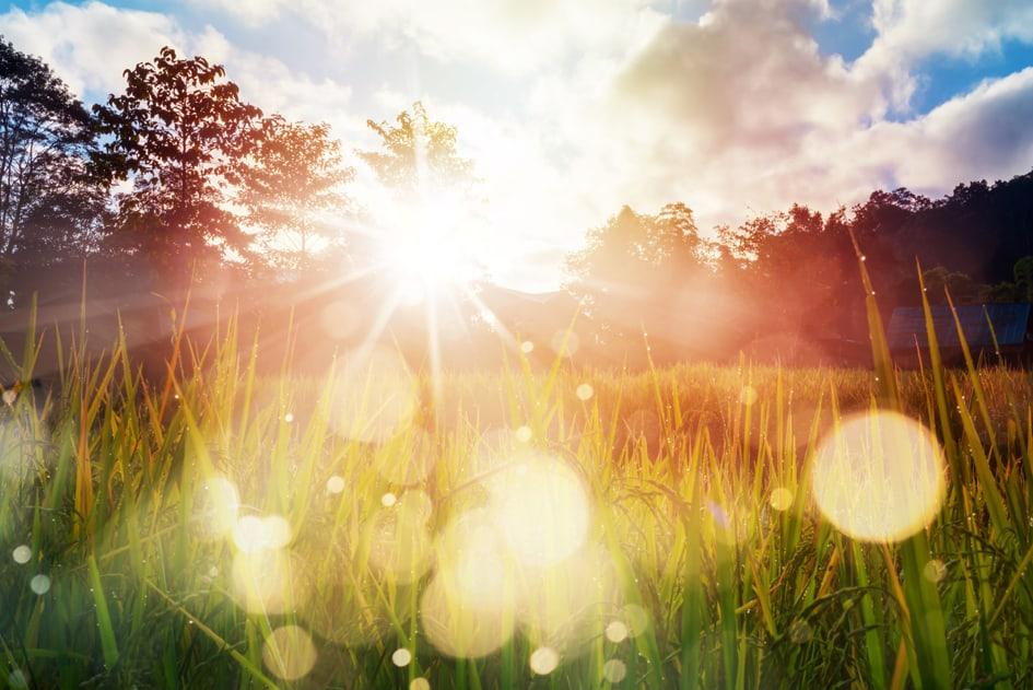 Sunshine on Dew